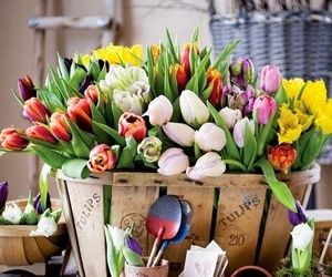 amazing, tulips, and colors image