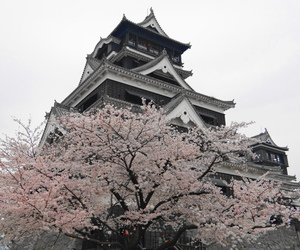 photography, architecture, and cherry blossom image