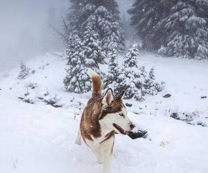 dog, winter, and husky image