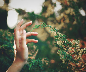 hand, nature, and green image