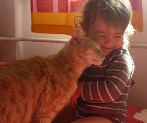 cat, baby, and animal image