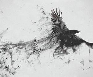 bird, black, and art image