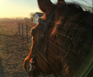 horse, horses, and sunset image