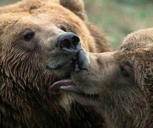 animals, bears, and lovely image