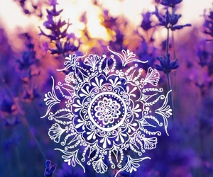 flowers, nature, and lavander image