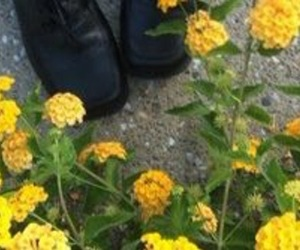 header, yellow, and flower image