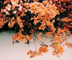 orange, colorful, and nature image