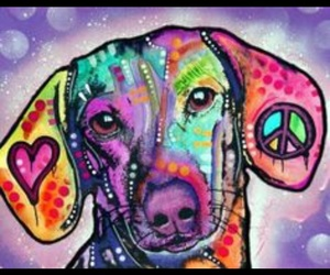dog, groovy, and hippie image