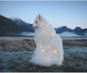 dog, animal, and light image