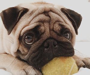 adorable, ball, and dog image
