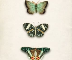 butterflies and pap image