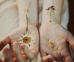aesthetic, daisy, and flower image