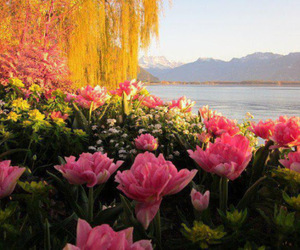 flowers, willow tree, and lake image