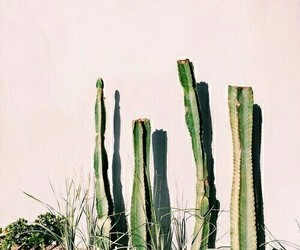 pastry, plants, and cactus image