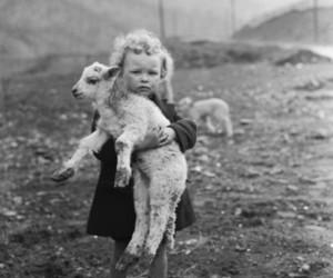 photography, lamb, and sheep image