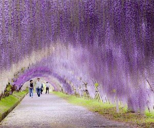flowers, tunnel, and japan image