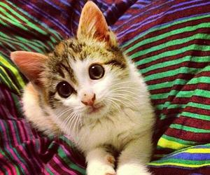 baby animals, cats, and furbbies image