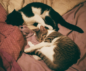 cats, photography, and vintage image
