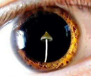 mushroom, eye, and eyes image
