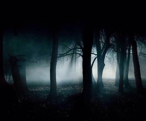 forest, fog, and woods image
