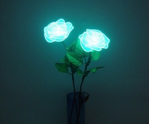 rose, flowers, and light image