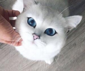 animals, kitten, and blue eyes image