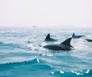 dolphin, ocean, and water animal image