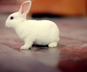 animals, bunny, and cute image