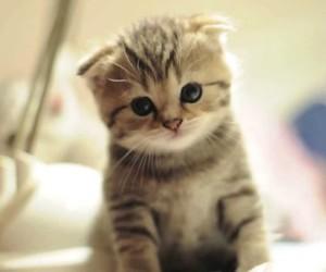 animals, furry, and kitten image