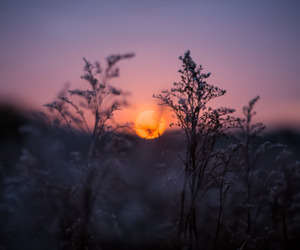 sun, nature, and sunset image