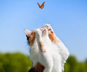 cat, butterfly, and nature image
