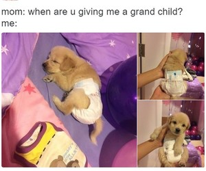 funny, fun, and puppy image