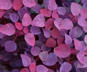 purple, wallpaper, and leaves image