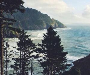 nature, tree, and sea image