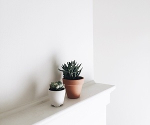 plants and white image