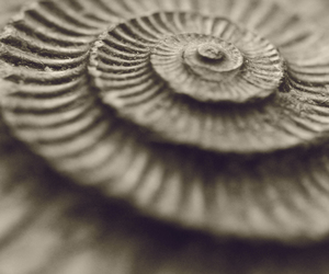 fossils, fractals, and macro image