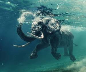 animal, elephant, and nature image