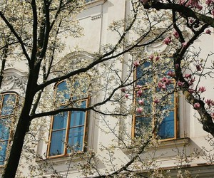 building, flowers, and spring image