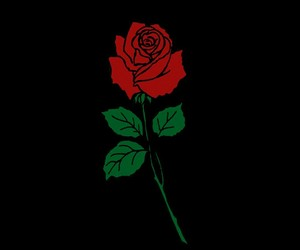 rose, red, and art image