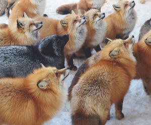 the fox village image