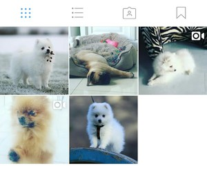 dog, instagram, and cute image