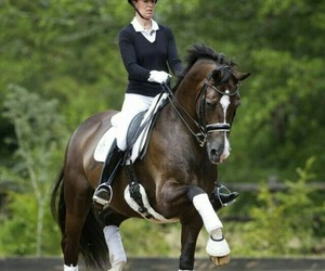 dressage, equine, and horse image
