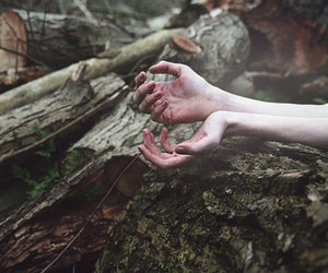 hands, forest, and tree image
