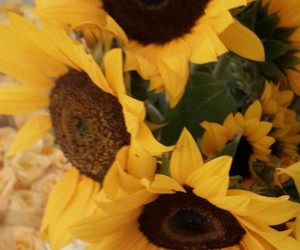 girasol and flowers image