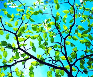 leaves, blue, and nature image