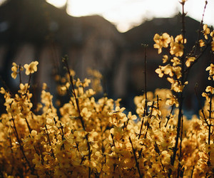 photography, flowers, and nature image