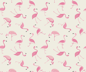 animal, background, and flamingo image