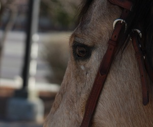 horse, photography, and animal image