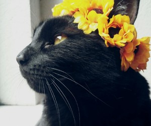 black cat, cat, and cute cats image