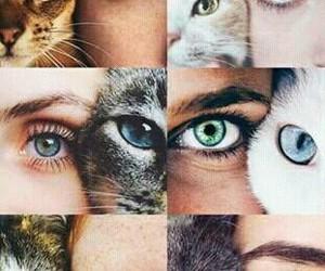 bonitos, Gatos, and ojos image